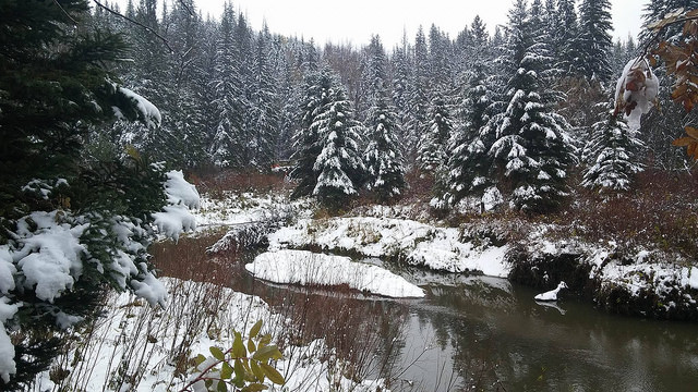 Whitemud Creek