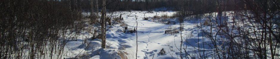 Elk Island Winter