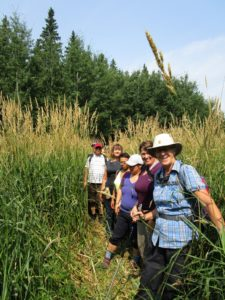Miquelon Lake Hikers on the path between tall grasses