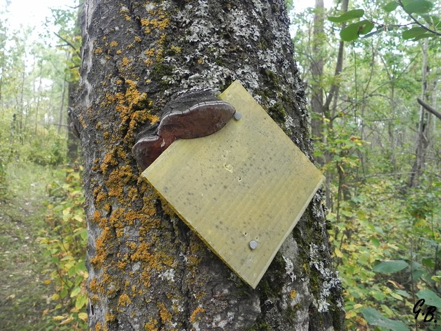 Old Trail Marker at Hastings Lake